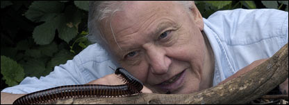 British wildlife expert David Attenborough