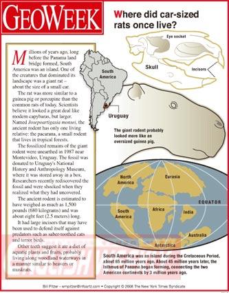 乌拉圭出土汽车般大小的鼠化石(图)