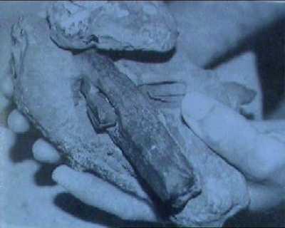 0.65亿年前金属工具(组图)