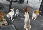 流浪狗会议