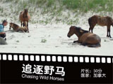 《追逐野马》