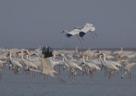 动物与自然电影周展映电影:《白鹤王国》