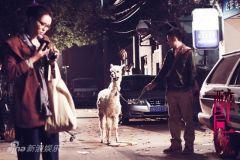 《醉后一夜》张静初牵羊驼出场萌宠神兽成线索