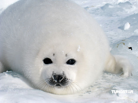 图文:莫文蔚关爱小动物-圆滚滚的小海豹