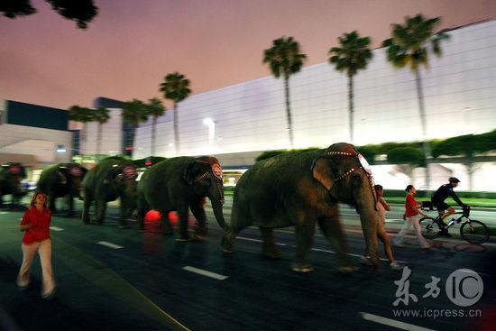 图文:大象抵达斯坦普斯中心--大象排队上街