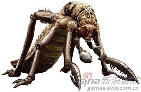 蝗虫简易结构图