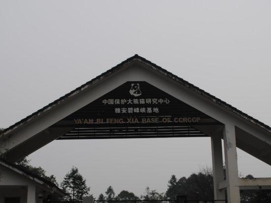 月19日 暴雪雅安熊猫保护基地游记魔兽世界 5.2熊猫人之谜 新浪高清图片