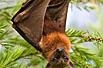 闻所未闻的非洲野性美食红烧蝙蝠(图)