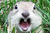 超雷爆笑松鼠系列