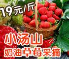 小汤山奶油草莓采摘