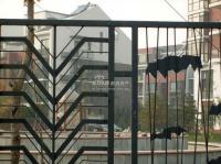 百旺茉莉园 实景图 22号楼