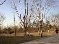 苹果派 实景图 周边公园
