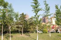 北京华侨城 实景图 周边