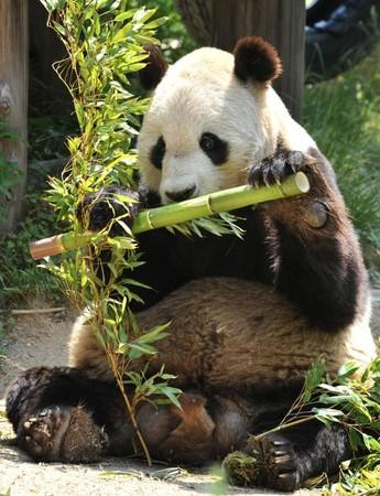 cn/   9月16日神户市立王子动物园宣布3位来自中国的专家已经抵日