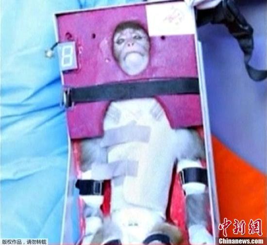 当地时间1月28日,伊朗向太空发射了一个载有猴子的太空舱,且随后在地面成功取回该飞行器。(视频截图)