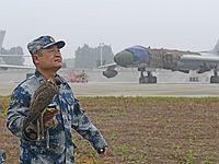 空军阅兵训练保障有高招:放鹰驱鸟