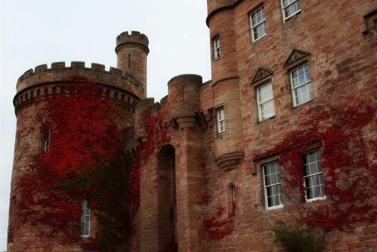 城堡墙壁上斑驳的藤蔓