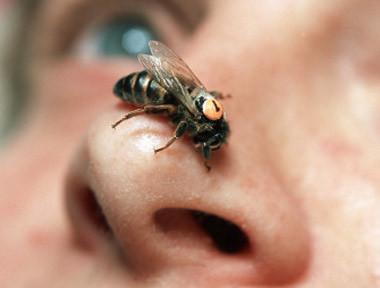 蜂毒能够令你返老还童