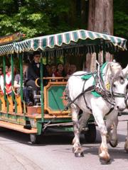 选手乘坐观光马车游览斯坦利公园