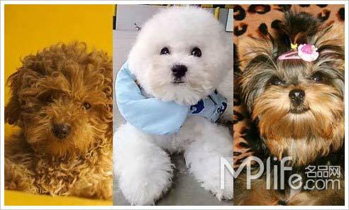 心爱的小宠物带出来,她们已经将这些可爱的小狗狗当做了自己的家人.