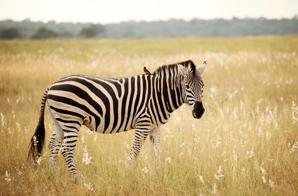 南非旅游注意事项_南非最佳旅游季节_南非旅