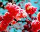 浪漫季节 赏花地盘点