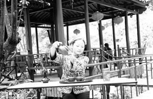 """在神龙川的""""御茶园""""品新茶"""