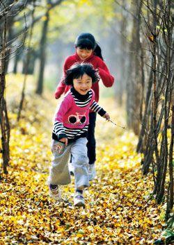童话般的银杏之秋