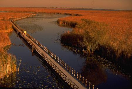秋天安大略公园的沼泽地.