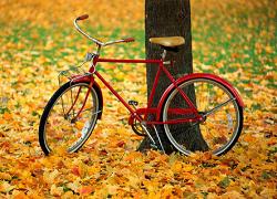 两轮驱动 路过最美秋天