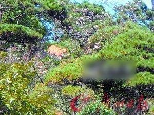 """鲍曙光拍摄的一组""""虎""""照。"""