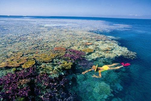 大堡礁浮潜