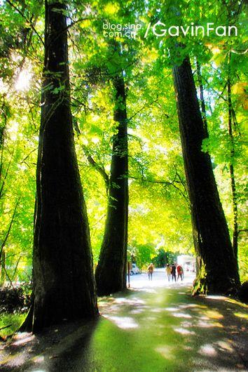 壁纸 风景 森林 桌面 354_530 竖版 竖屏 手机
