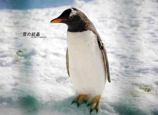 鸟巢冰雪嘉年华里的极地动物
