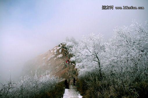 冬日树挂 摄影:水摄影