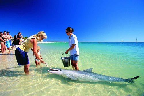 在蒙克米亚喂海豚