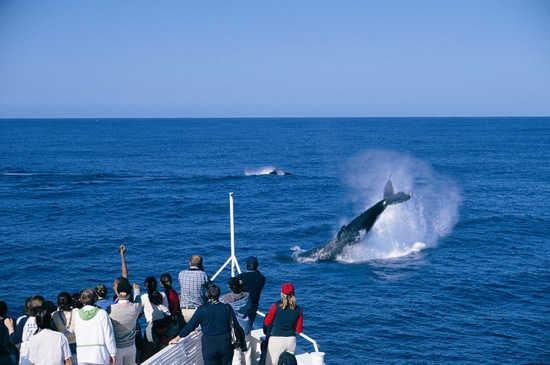 在蒙塔格岛与鲸鱼邂逅