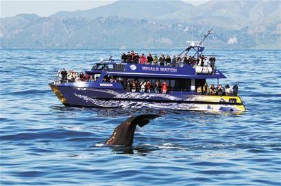 新西兰观鲸