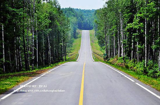路边是大片的白桦树,景色非常的漂亮