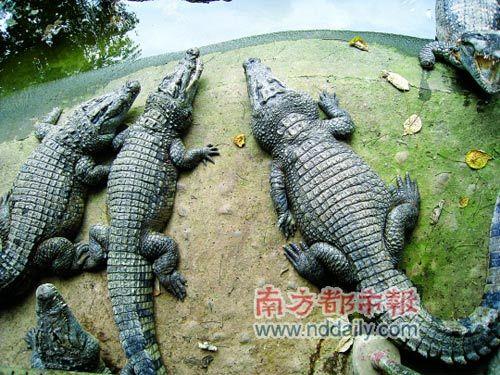 克拉克温泉度假城里的恐龙鳄鱼漂流河。