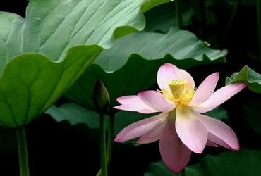 紫竹院赏荷 体味莲香之美