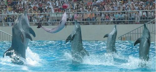 海洋动物总动员