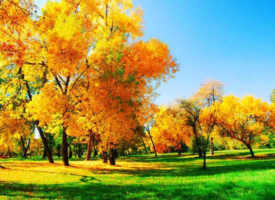 摄影技巧:教您拍下最美的秋天红叶(5)六安视频v红叶图片
