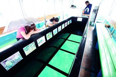 底部透明的玻璃船,带我们看到另一个缤纷世界