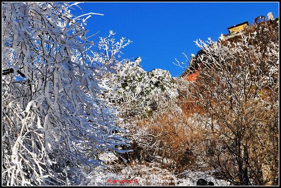 风中的树枝上挂满了美丽的雪挂