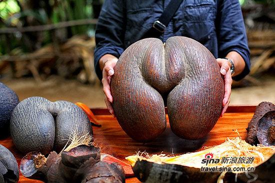传说中的海椰子