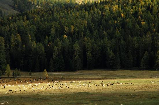 新浪旅游配图:牧场美景 摄影:肉头阿咚