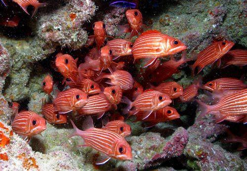 全球最大的海洋保护区之一