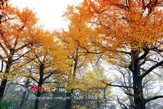 秋天才有的颜色-湖南永州桐子坳 秋色中最美的村庄
