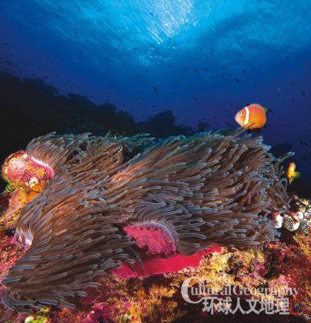 奇幻的海底世界